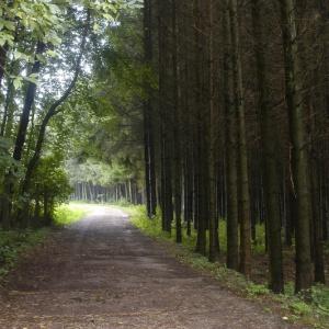 Waldweg bei Bechhofen