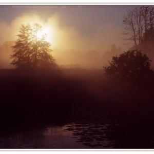 Baum im Nebel mit Gegenlicht