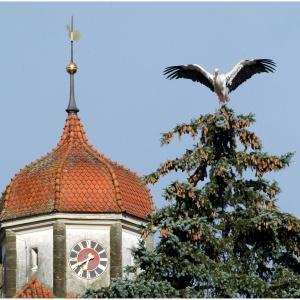 Storch Kirche