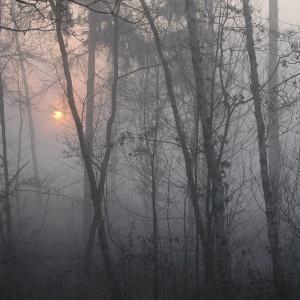 Düsterwald