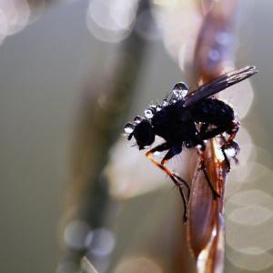 nasse Fliege