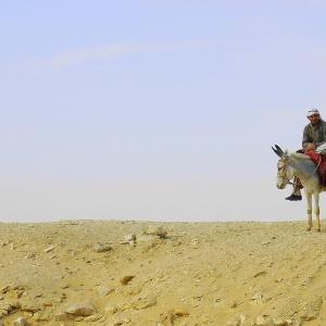 Wüstenreiter