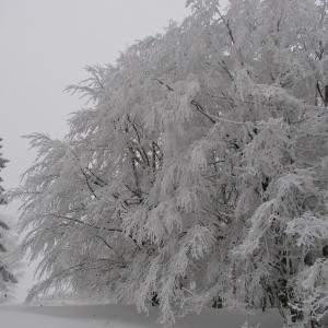 Frostig
