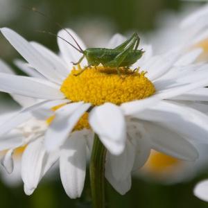 Blumenbesuch